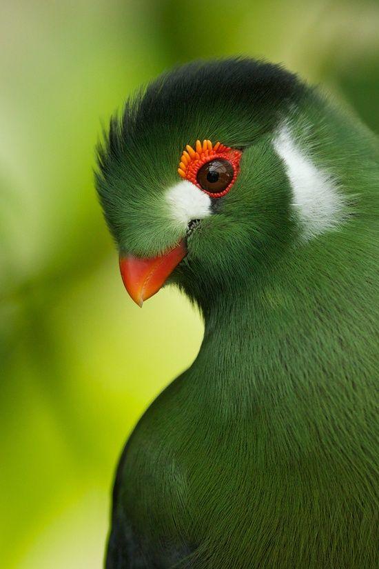 بالصور صور غريبه وجميله , سبحان الخالق اجمل طيور بالوان رائعة 10794 2