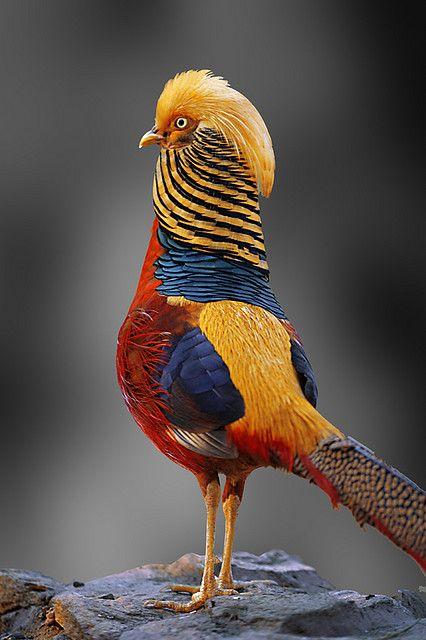 بالصور صور غريبه وجميله , سبحان الخالق اجمل طيور بالوان رائعة 10794 4