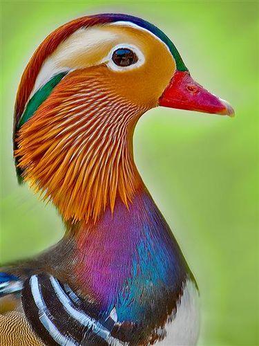 بالصور صور غريبه وجميله , سبحان الخالق اجمل طيور بالوان رائعة 10794 5