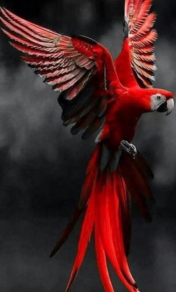 بالصور صور غريبه وجميله , سبحان الخالق اجمل طيور بالوان رائعة 10794 8