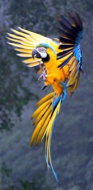 بالصور صور غريبه وجميله , سبحان الخالق اجمل طيور بالوان رائعة 10794 9