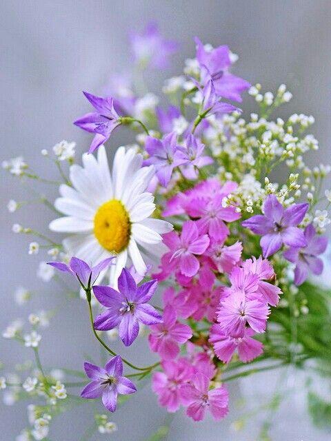 بالصور خلفيات ورود روعه , زهور عالم الجميلة 10826 1