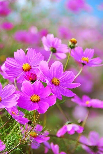 بالصور خلفيات ورود روعه , زهور عالم الجميلة 10826 2