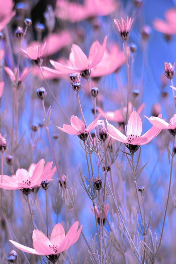 بالصور خلفيات ورود روعه , زهور عالم الجميلة 10826 3