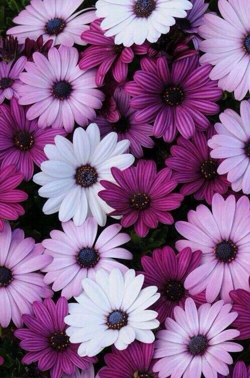 بالصور خلفيات ورود روعه , زهور عالم الجميلة 10826 4