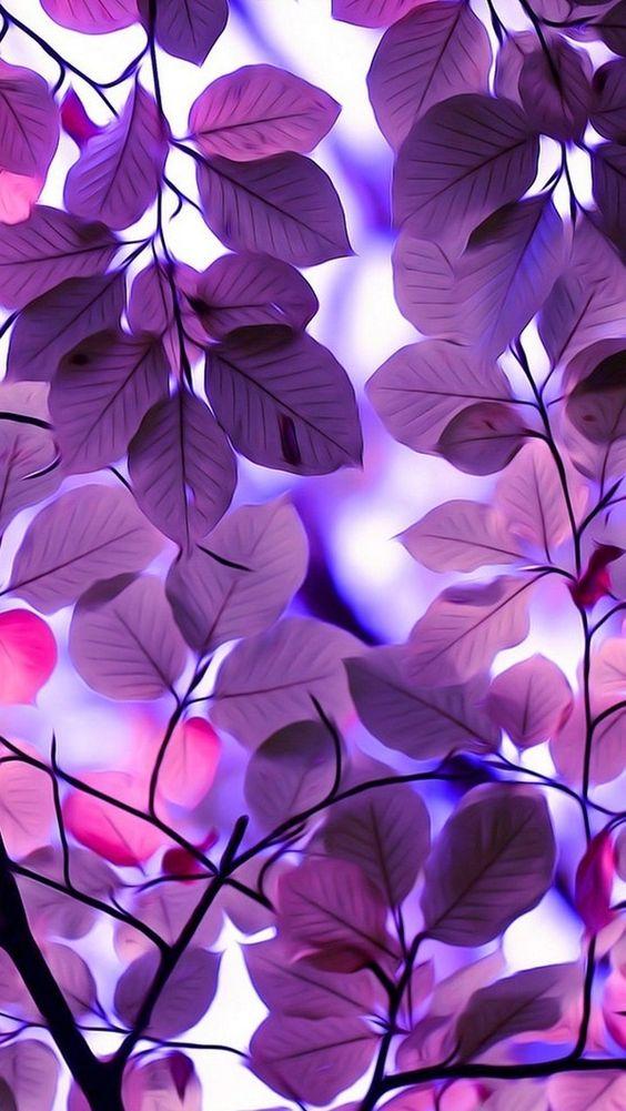 بالصور خلفيات ورود روعه , زهور عالم الجميلة 10826 5