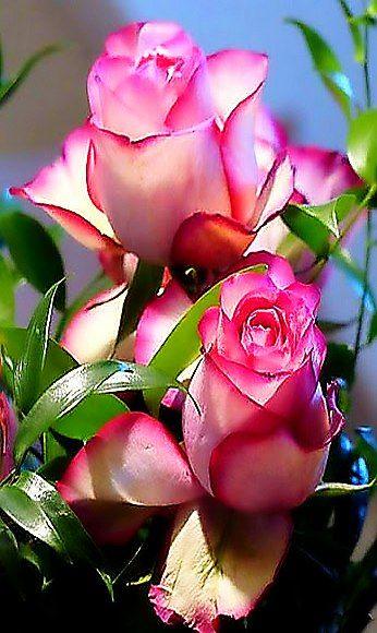 بالصور خلفيات ورود روعه , زهور عالم الجميلة 10826 8
