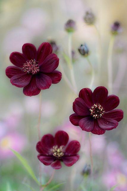 صوره خلفيات ورود روعه , زهور عالم الجميلة