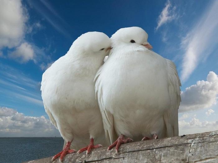 بالصور اجمل اللقطات الرومانسية , صور حب وغرام 12290 7