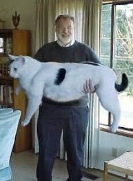 بالصور اكبر قطة بالعالم غير القطة السابقة , البعض ممكن مايصدق 2500 6