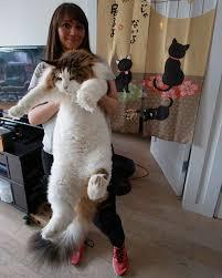 بالصور اكبر قطة بالعالم غير القطة السابقة , البعض ممكن مايصدق 2500 7