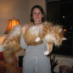 اكبر قطة بالعالم غير القطة السابقة , البعض ممكن مايصدق