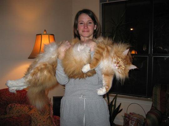 صوره اكبر قطة بالعالم غير القطة السابقة , البعض ممكن مايصدق