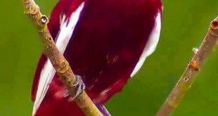 صوره صور غريبه وجميله , سبحان الخالق اجمل طيور بالوان رائعة