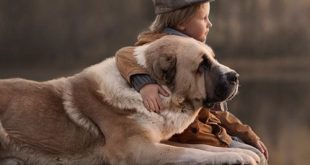 صور بدون تعليق , اطفال يعشقون الكلاب