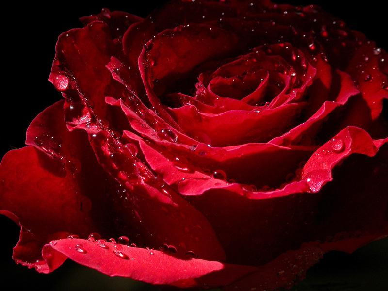 صورة اجمل الصور الرومانسية للعاشقين , رقة المشاعر في عالم الخيال 14919 5