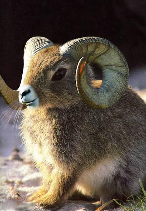 صوره صور حيوانات غريبه , انواع متعددة للحيوانات لن نعرفها