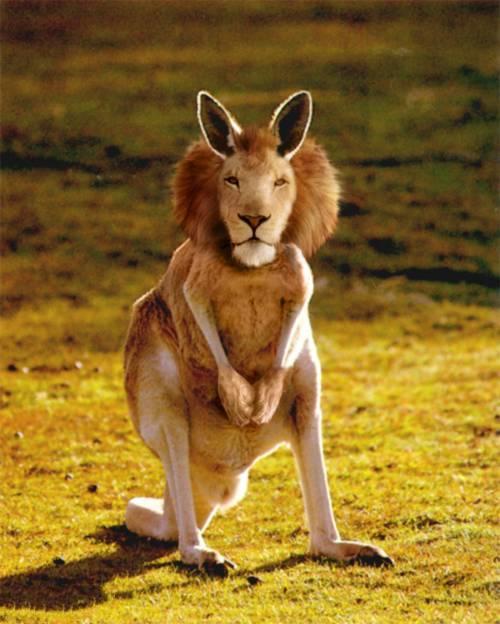 صورة صور حيوانات غريبه , انواع متعددة للحيوانات لن نعرفها